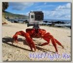 Аренда экшн-камеры GoPro HERO5 на 3 дня